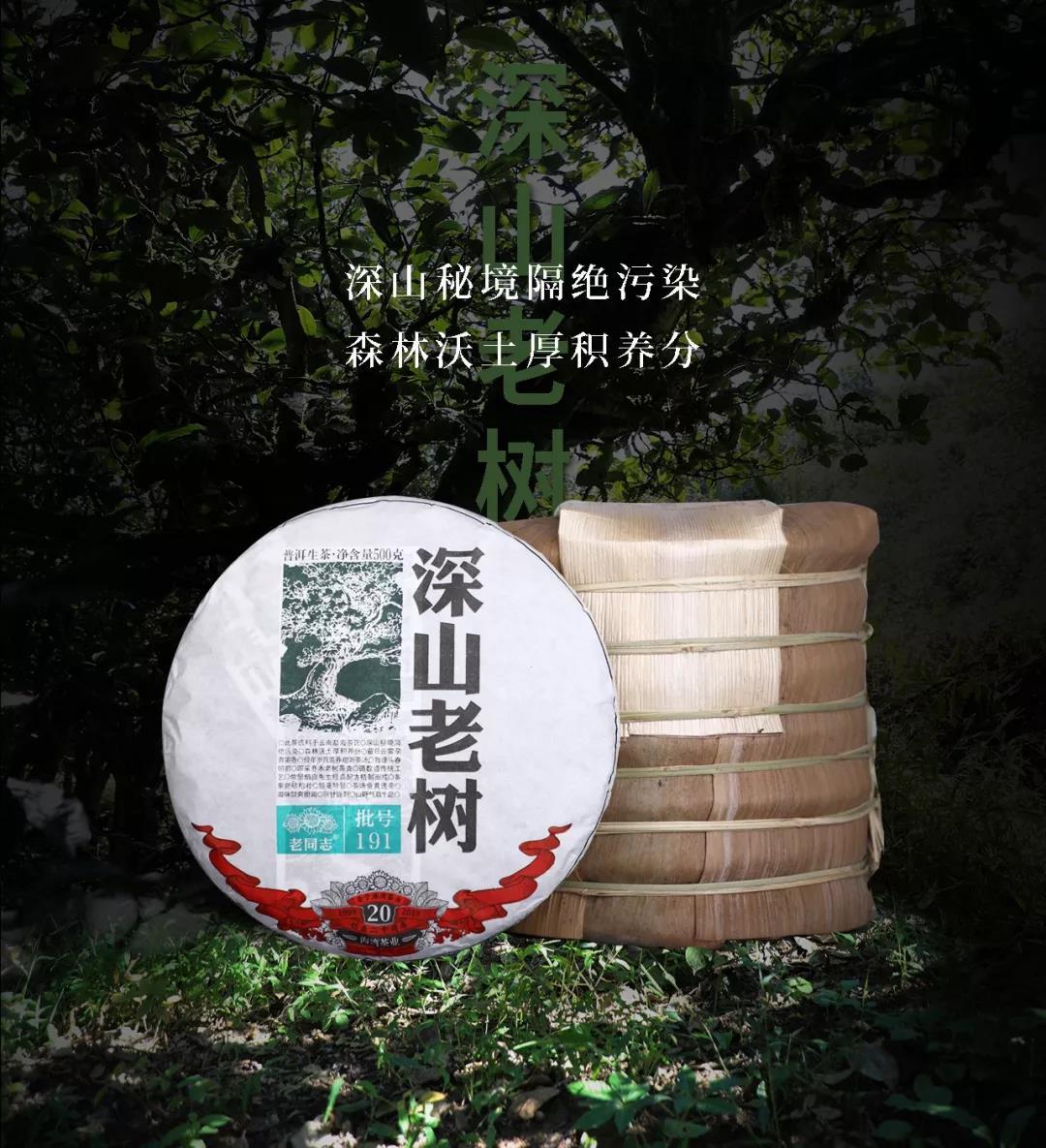 2019년 노동지 심산노수(深山老树) 생차.jpg